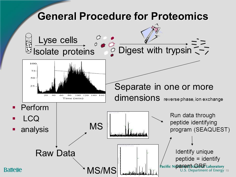 19 General Procedure for Proteomics Perform LCQ analysis Lyse cells Isolate proteins Digest with trypsin Separate in one or more dimensions reverse phase, ion exchange Raw Data MS MS/MS Run data through peptide identifying program (SEAQUEST) Identify unique peptide = identify parent ORF