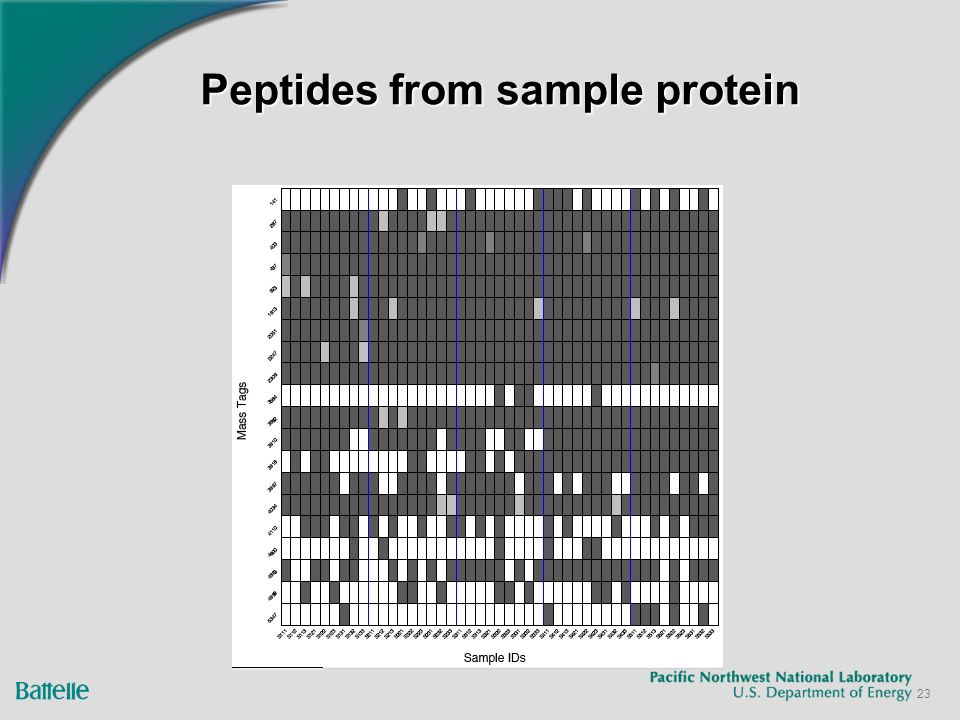 23 Peptides from sample protein
