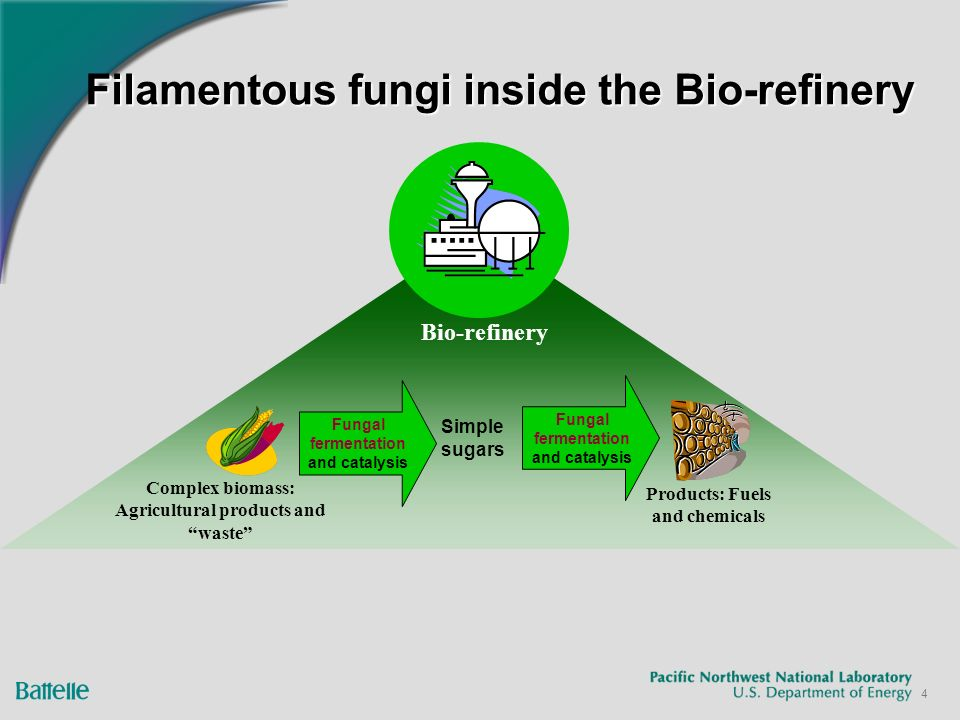 4 Filamentous fungi inside the Bio-refinery Bio-refinery Complex biomass: Agricultural products and waste Fungal fermentation and catalysis Simple sugars Products: Fuels and chemicals Fungal fermentation and catalysis