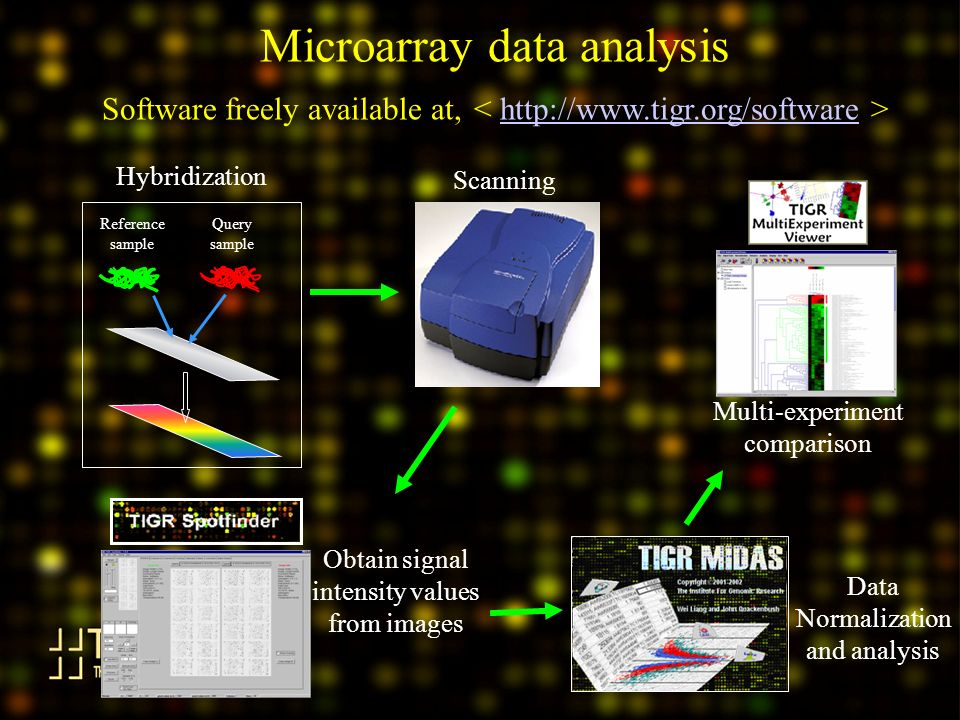 Microarray data analysis Software freely available at, http://www.tigr.org/software Reference sample Query sample Hybridization Obtain signal intensity values from images Scanning Multi-experiment comparison Data Normalization and analysis