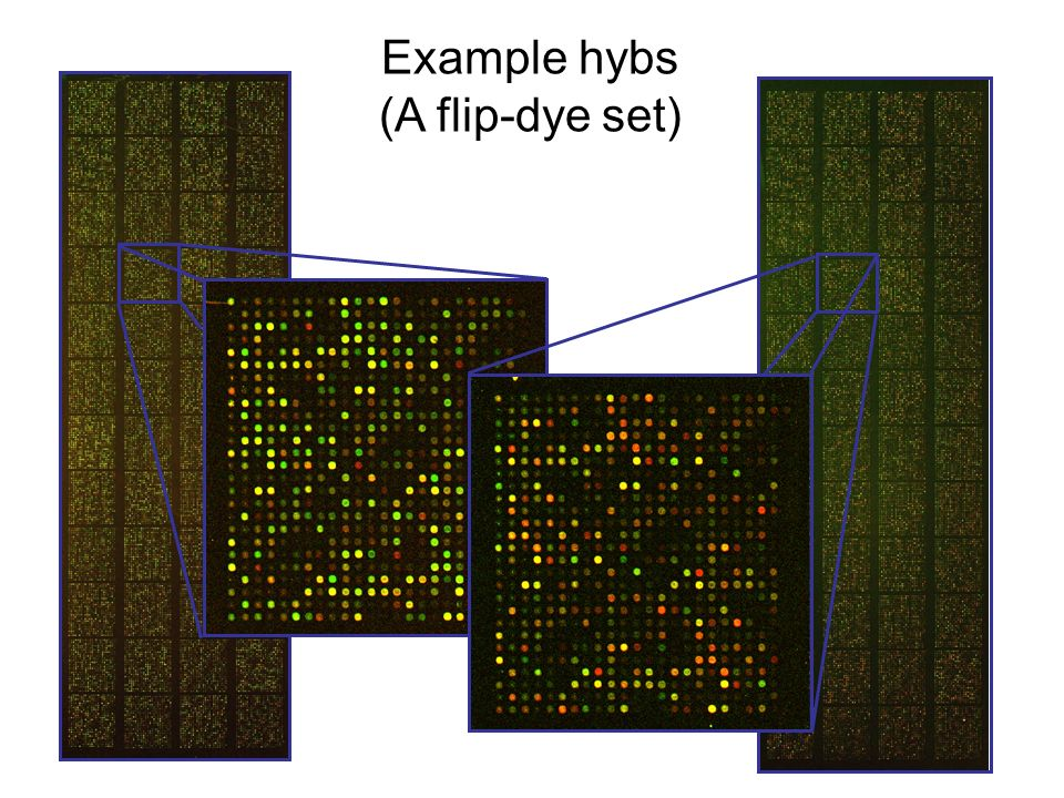 Example hybs (A flip-dye set)