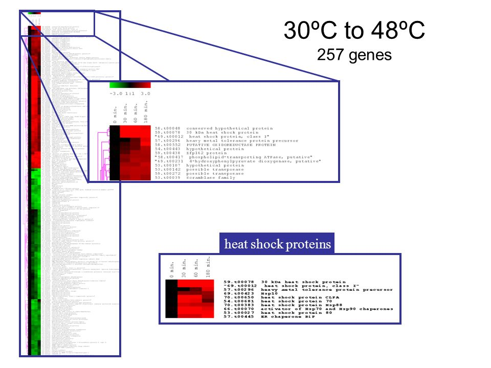 30ºC to 48ºC 257 genes heat shock proteins