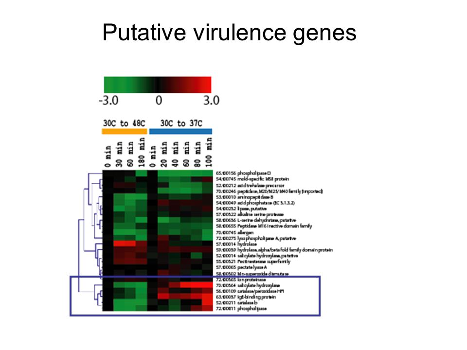 Putative virulence genes
