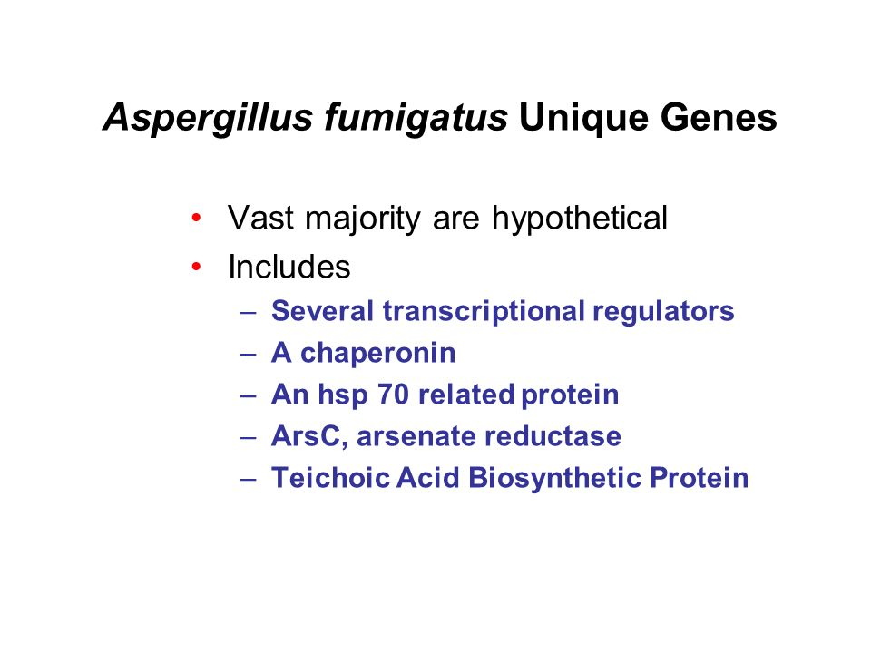 Aspergillus fumigatus Unique Genes Vast majority are hypothetical Includes –Several transcriptional regulators –A chaperonin –An hsp 70 related protein –ArsC, arsenate reductase –Teichoic Acid Biosynthetic Protein