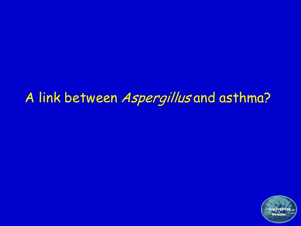 A link between Aspergillus and asthma?