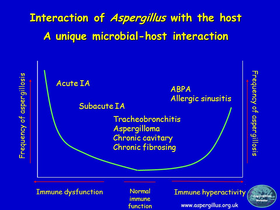 Interaction of Aspergillus with the host A unique microbial-host interaction Immune dysfunction Frequency of aspergillosis Immune hyperactivity Freque