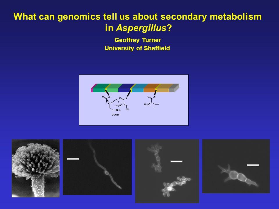 Aspergillus nidulans annotated genome (Broad Institute) 5 module NRPSPKS