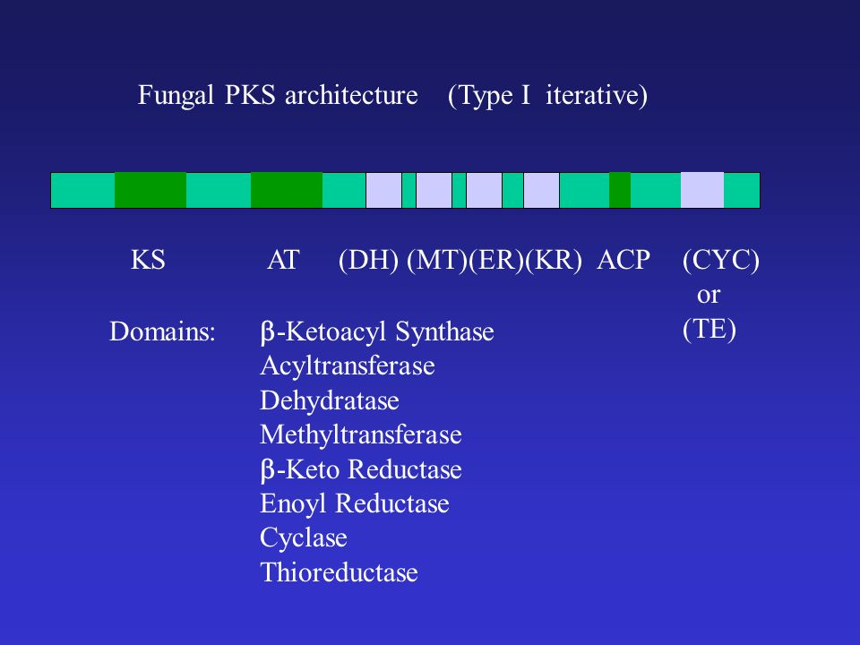 Fungal PKS architecture (Type I iterative) KSATACP(CYC) or (TE) (DH) (MT)(ER)(KR) -Ketoacyl Synthase Acyltransferase Dehydratase Methyltransferase -Keto Reductase Enoyl Reductase Cyclase Thioreductase Domains: