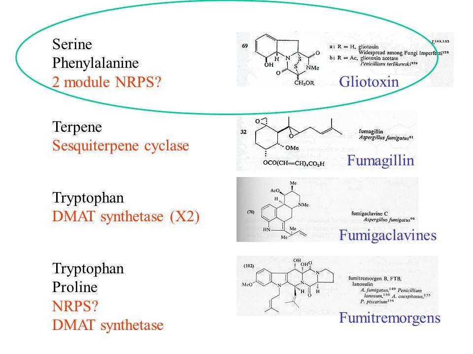 Tryptophan Proline NRPS? DMAT synthetase Tryptophan DMAT synthetase (X2) Serine Phenylalanine 2 module NRPS? Terpene Sesquiterpene cyclase Gliotoxin F