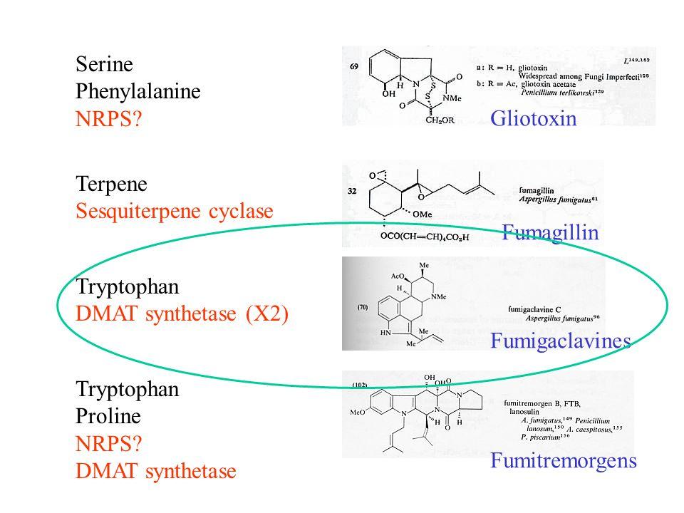 Tryptophan Proline NRPS? DMAT synthetase Tryptophan DMAT synthetase (X2) Serine Phenylalanine NRPS? Terpene Sesquiterpene cyclase Gliotoxin Fumagillin