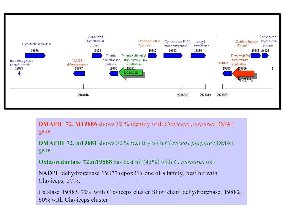 monooxygenase- related protein Hypothetical protein NADP- dehydrogenase Conserved hypothetical protein Pisatin demethylase, putative Putative dimethyl- allyl-tryptophan- synthetase Oxidoreductase Cp ox2 Cytochrome P450, monooxygenase Acetyl transferase Catalase Dimethylallyl trryptophan synthetase Oxidoreductase Cp ox1 Conservedd Hypothetical protein DMATII DMATII 72.