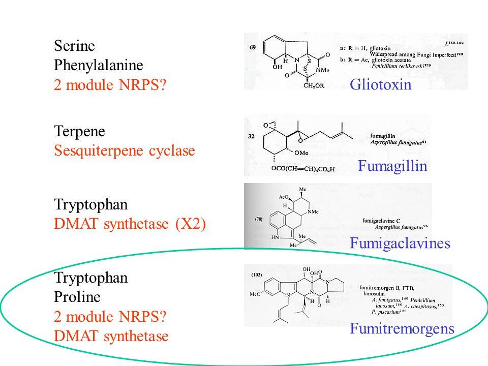 Tryptophan Proline 2 module NRPS? DMAT synthetase Tryptophan DMAT synthetase (X2) Serine Phenylalanine 2 module NRPS? Terpene Sesquiterpene cyclase Gl