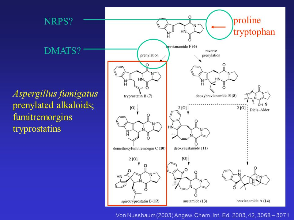 Von Nussbaum (2003) Angew. Chem. Int. Ed. 2003, 42, 3068 – 3071 proline tryptophan Aspergillus fumigatus prenylated alkaloids; fumitremorgins tryprost