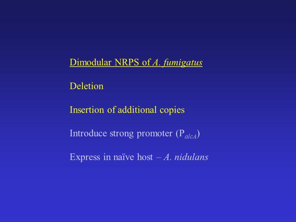 Dimodular NRPS of A.