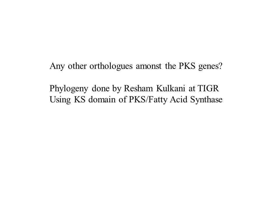 Any other orthologues amonst the PKS genes.
