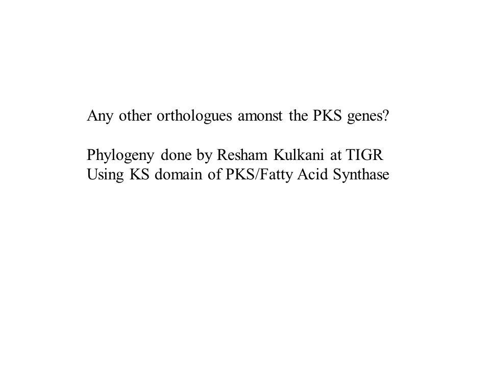 Any other orthologues amonst the PKS genes? Phylogeny done by Resham Kulkani at TIGR Using KS domain of PKS/Fatty Acid Synthase