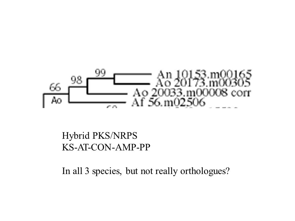 Hybrid PKS/NRPS KS-AT-CON-AMP-PP In all 3 species, but not really orthologues