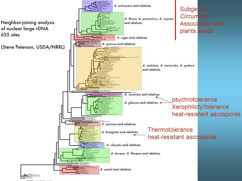 The players in Aspergillus genomics Aspergillus nidulans –Emericella clade –Aspergillus nidulans group –Aspergillus section Nidulantes Aspergillus fumigatus Aspergillus oryzae