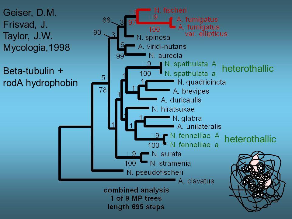 Geiser, D.M. Frisvad, J. Taylor, J.W. Mycologia 1998 Beta-tubulin + rodA hydrophobin