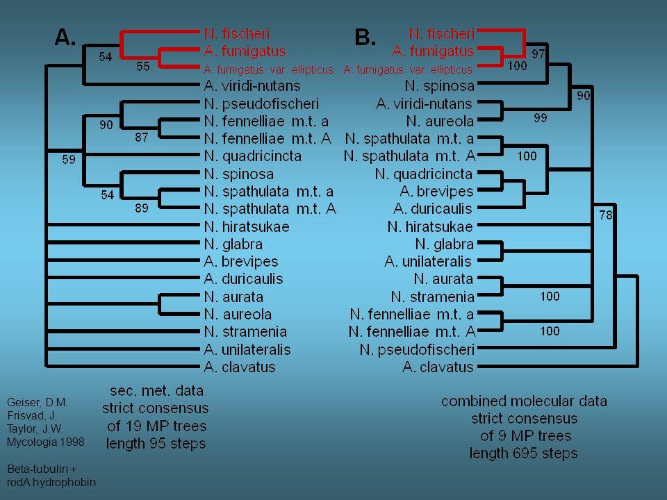 Evolution in Aspergillus fumigatus group Monophyletic A.