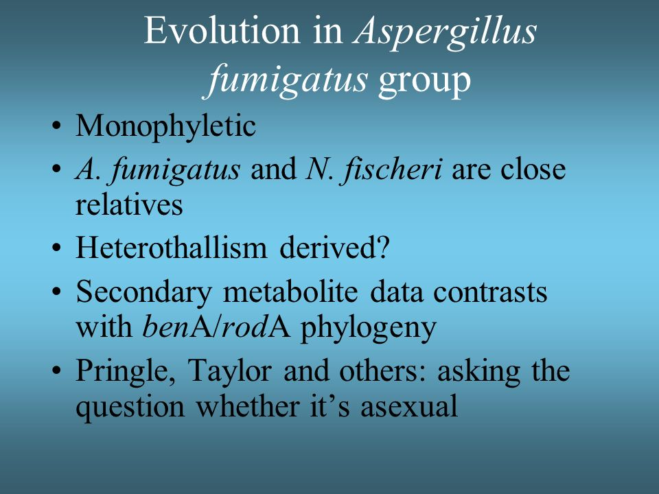 Evolution in Aspergillus fumigatus group Monophyletic A. fumigatus and N. fischeri are close relatives Heterothallism derived? Secondary metabolite da