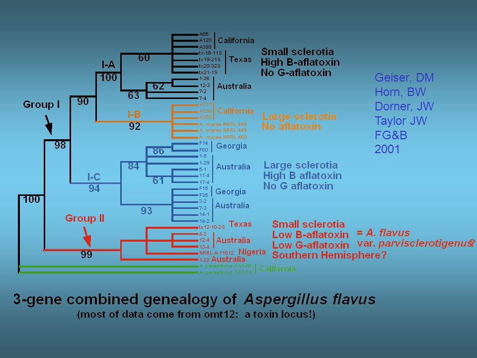Using evolution to do good genomics Comparative genomics IS evolutionary biology Conservation of function is an adaptive process Clark et al.