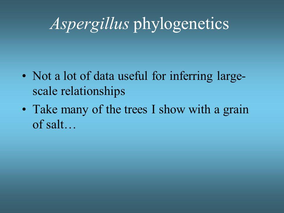 Aspergillus -- monophyletic? Tamura, M. Kawahara, K. Sugiyama, J. 2000. 18S rDNA