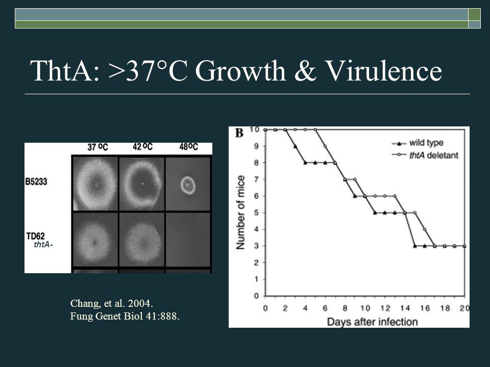ThtA: >37°C Growth & Virulence Chang, et al. 2004. Fung Genet Biol 41:888. thtA-
