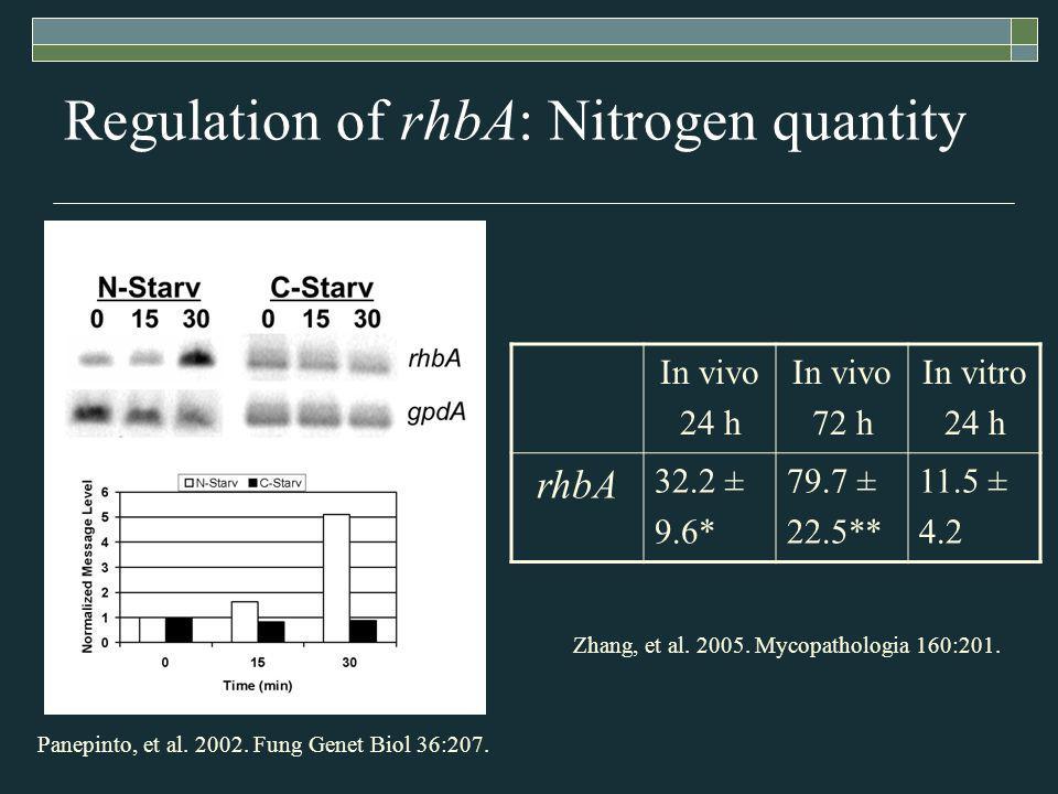 Regulation of rhbA: Nitrogen quantity In vivo 24 h In vivo 72 h In vitro 24 h rhbA 32.2 ± 9.6* 79.7 ± 22.5** 11.5 ± 4.2 Panepinto, et al.