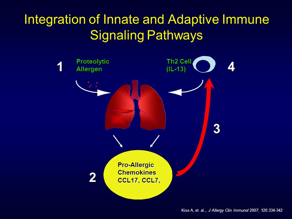 Integration of Innate and Adaptive Immune Signaling PathwaysProteolyticAllergen1 Th2 Cell (IL-13)4 Pro-AllergicChemokines CCL17, CCL7, 2 3 Kiss A, et.