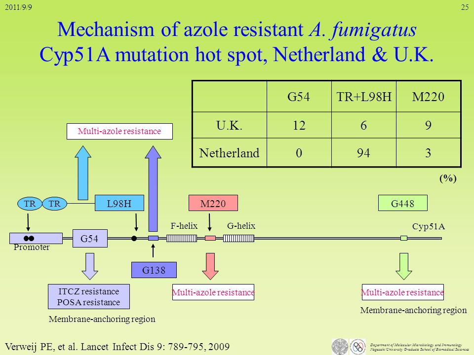 Department of Molecular Microbiology and Immunology Nagasaki University Graduate School of Biomedical Sciences 25 Mechanism of azole resistant A. fumi