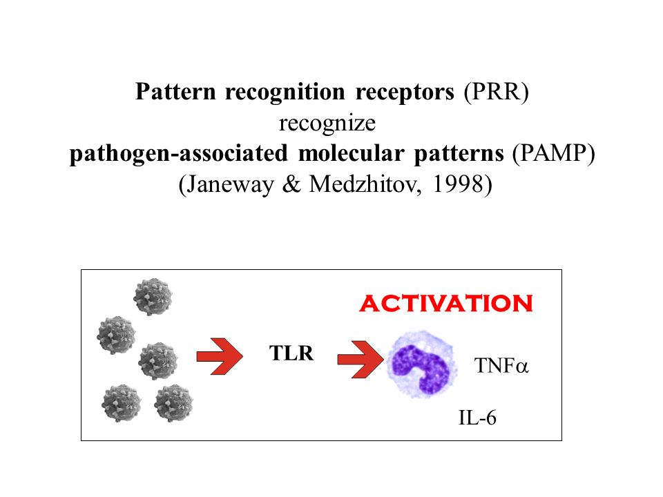 Pattern recognition receptors (PRR) recognize pathogen-associated molecular patterns (PAMP) (Janeway & Medzhitov, 1998) activation TNF IL-6 TLR