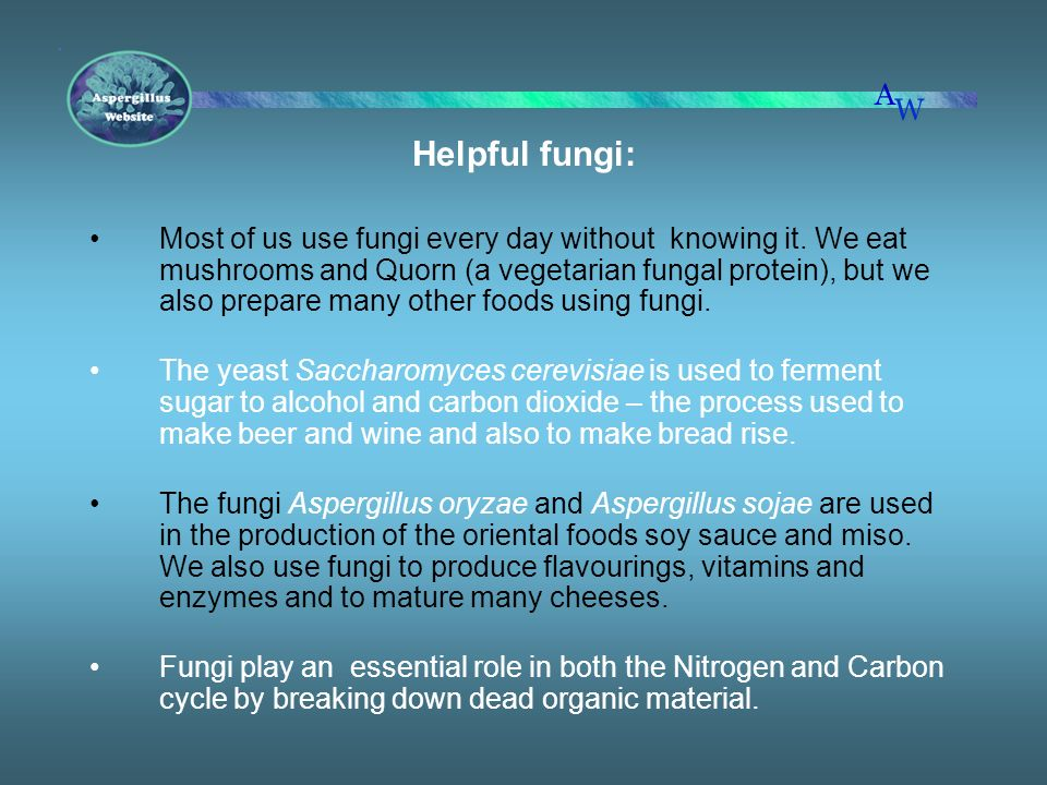 Helpful fungi: Most of us use fungi every day without knowing it. We eat mushrooms and Quorn (a vegetarian fungal protein), but we also prepare many o