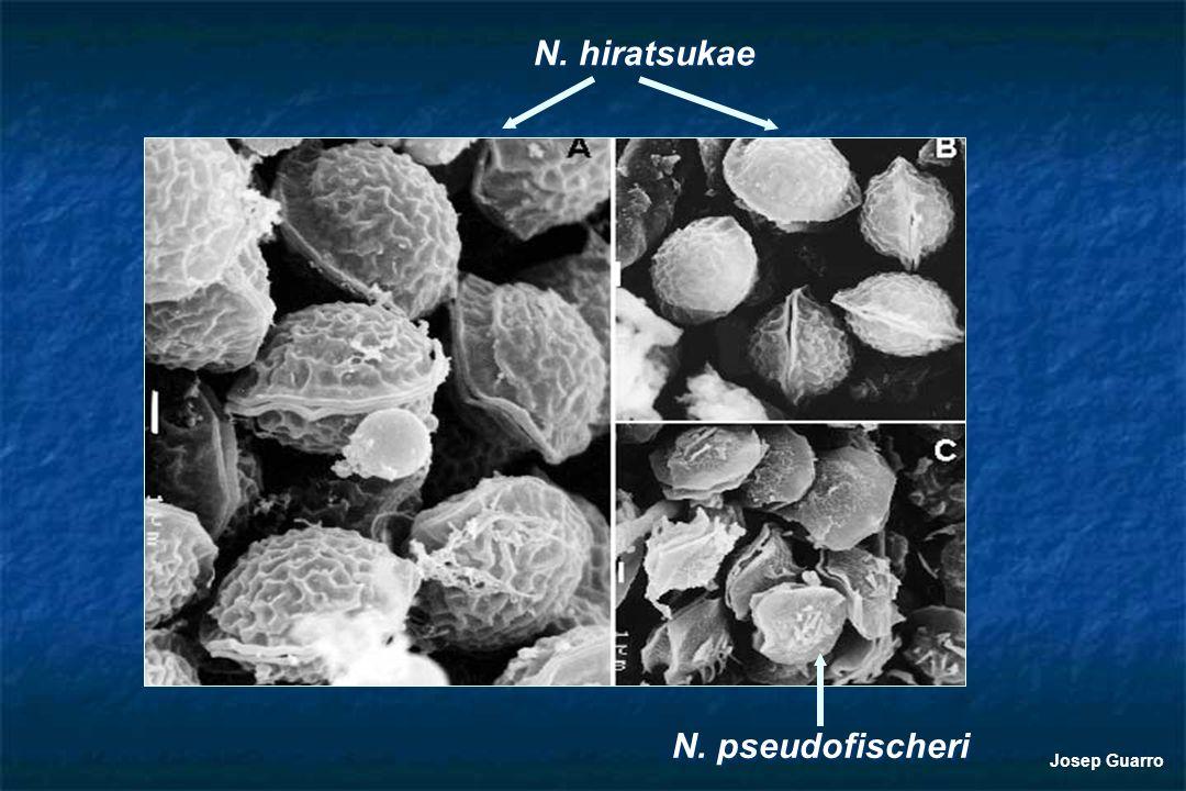 N. pseudofischeri N. hiratsukae Josep Guarro