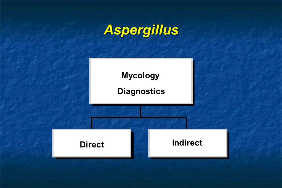 Aspergillus Direct Indirect Mycology Diagnostics