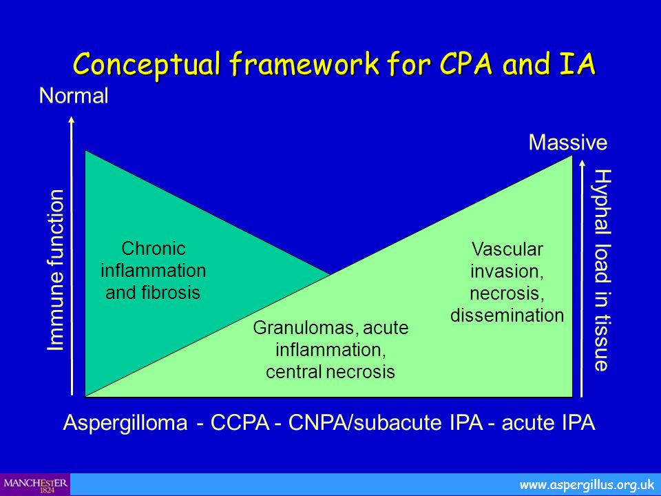 Conceptual framework for CPA and IA Conceptual framework for CPA and IA www.aspergillus.org.uk Aspergilloma - CCPA - CNPA/subacute IPA - acute IPA Imm