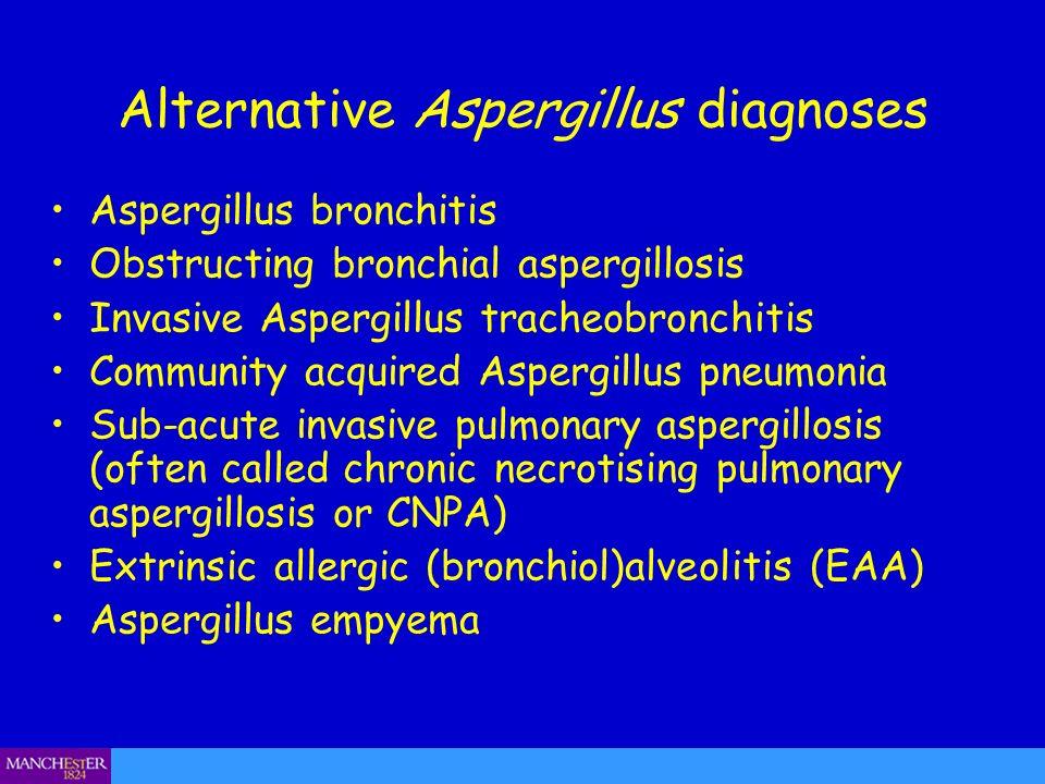 Alternative Aspergillus diagnoses Aspergillus bronchitis Obstructing bronchial aspergillosis Invasive Aspergillus tracheobronchitis Community acquired