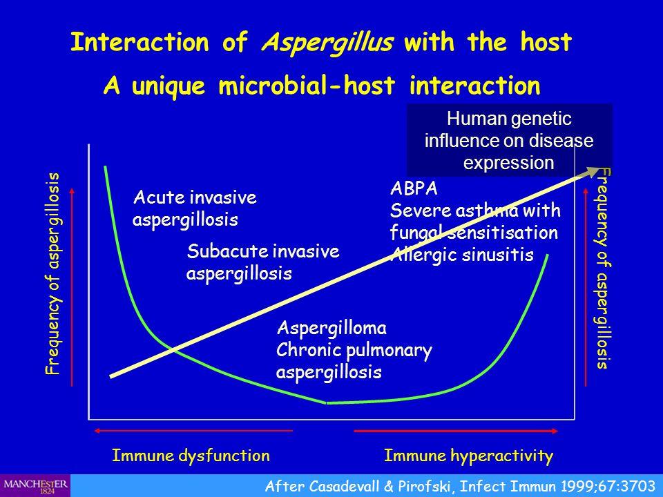 Alternative Aspergillus diagnoses Aspergillus bronchitis Obstructing bronchial aspergillosis Invasive Aspergillus tracheobronchitis Community acquired Aspergillus pneumonia Sub-acute invasive pulmonary aspergillosis (often called chronic necrotising pulmonary aspergillosis or CNPA) Extrinsic allergic (bronchiol)alveolitis (EAA) Aspergillus empyema