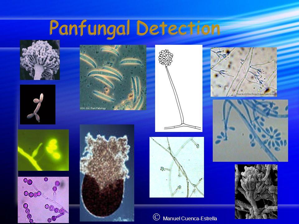 Panfungal Detection Manuel Cuenca-Estrella