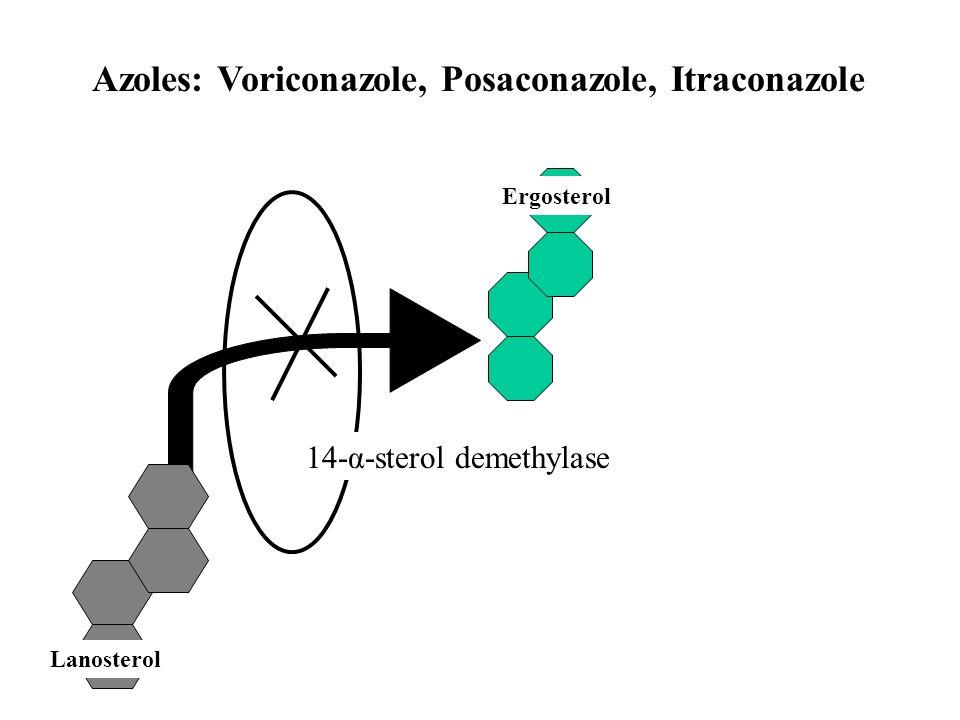 14-α-sterol demethylase Azoles: Voriconazole, Posaconazole, Itraconazole Ergosterol Lanosterol