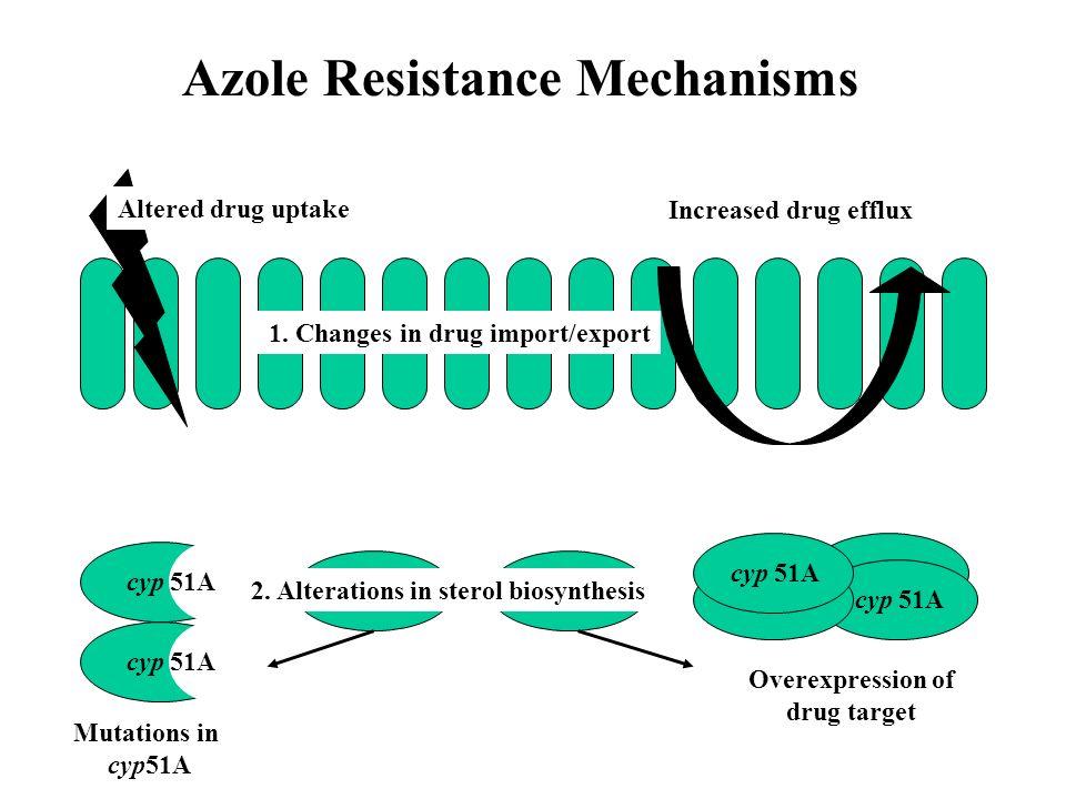Azole Resistance Mechanisms Altered drug uptake Increased drug efflux 1. Changes in drug import/export cyp 51A Mutations in cyp51A Overexpression of d