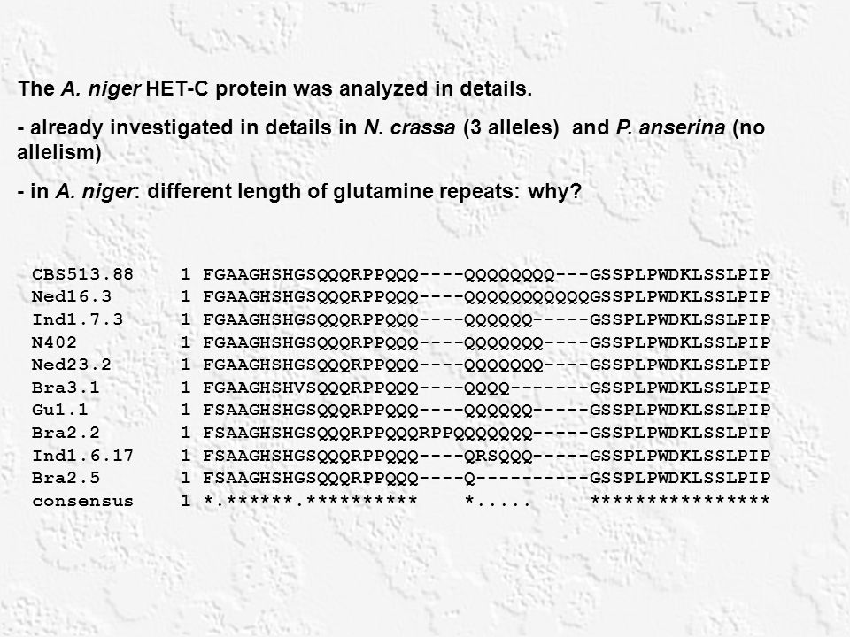 The A. niger HET-C protein was analyzed in details. - already investigated in details in N. crassa (3 alleles) and P. anserina (no allelism) - in A. n