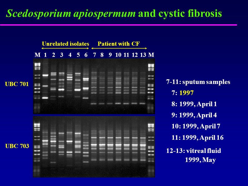 Scedosporium apiospermum and cystic fibrosis UBC 701 UBC 703 M12345678910111213M 7-11: sputum samples 7: 8: 9: 1999, April 4 10: 1999, April 7 11: 199