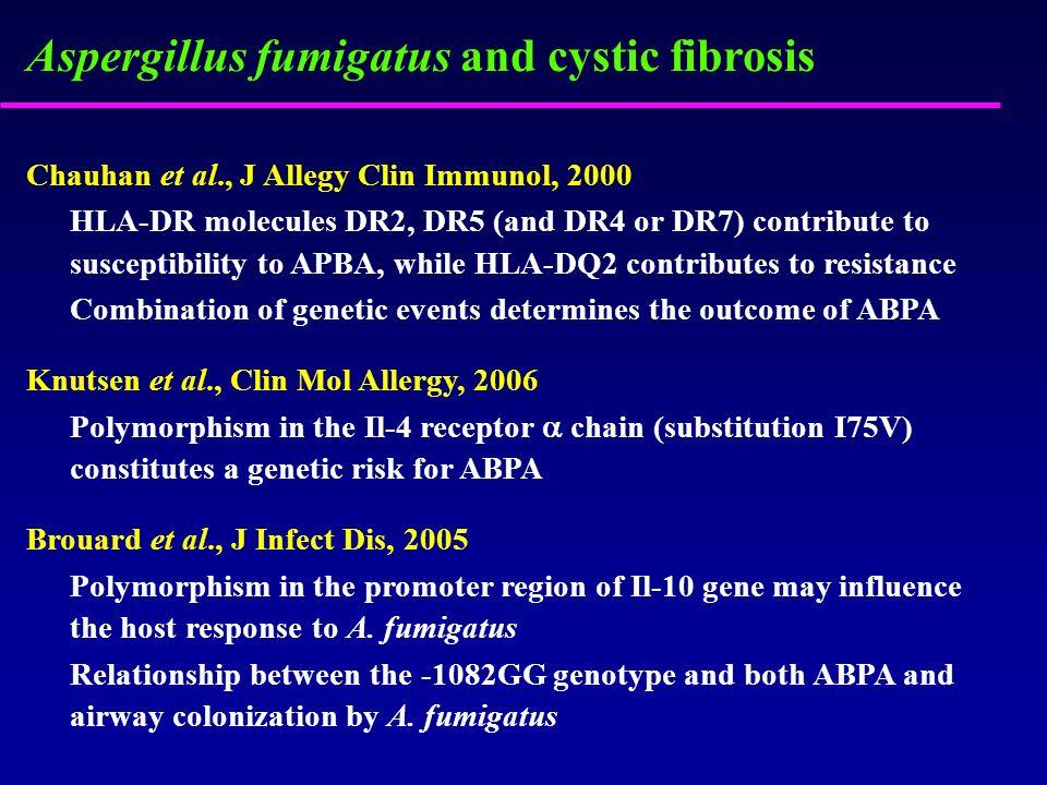 Aspergillus fumigatus and cystic fibrosis Chauhan et al., J Allegy Clin Immunol, 2000 HLA-DR molecules DR2, DR5 (and DR4 or DR7) contribute to suscept