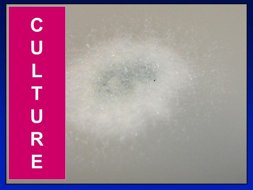 11 CULTURECULTURE