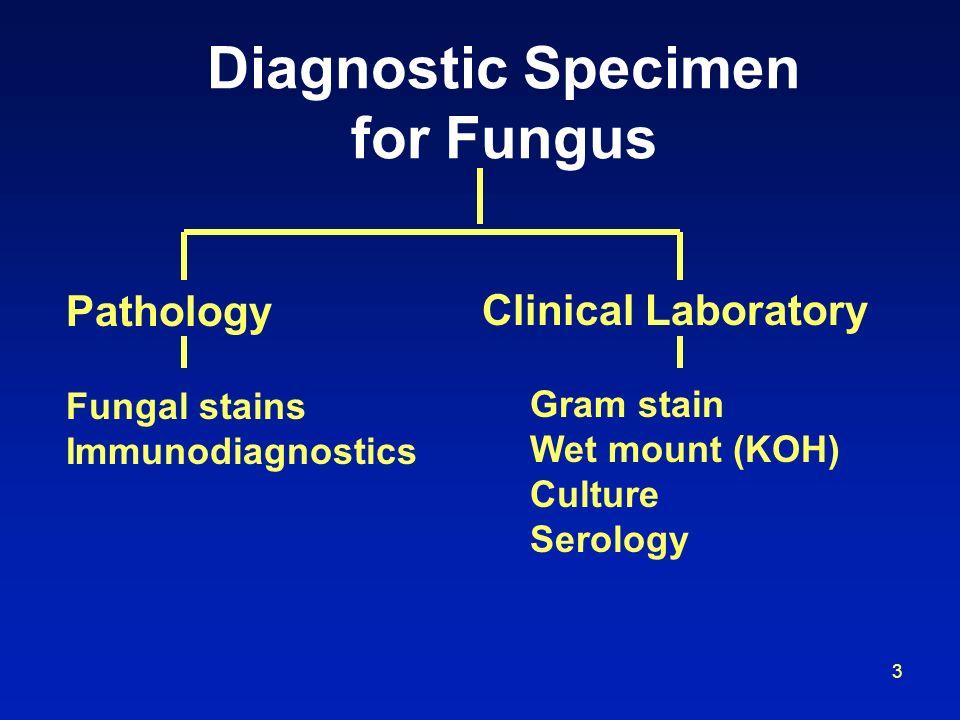 3 Diagnostic Specimen for Fungus Pathology Fungal stains Immunodiagnostics Clinical Laboratory Gram stain Wet mount (KOH) Culture Serology