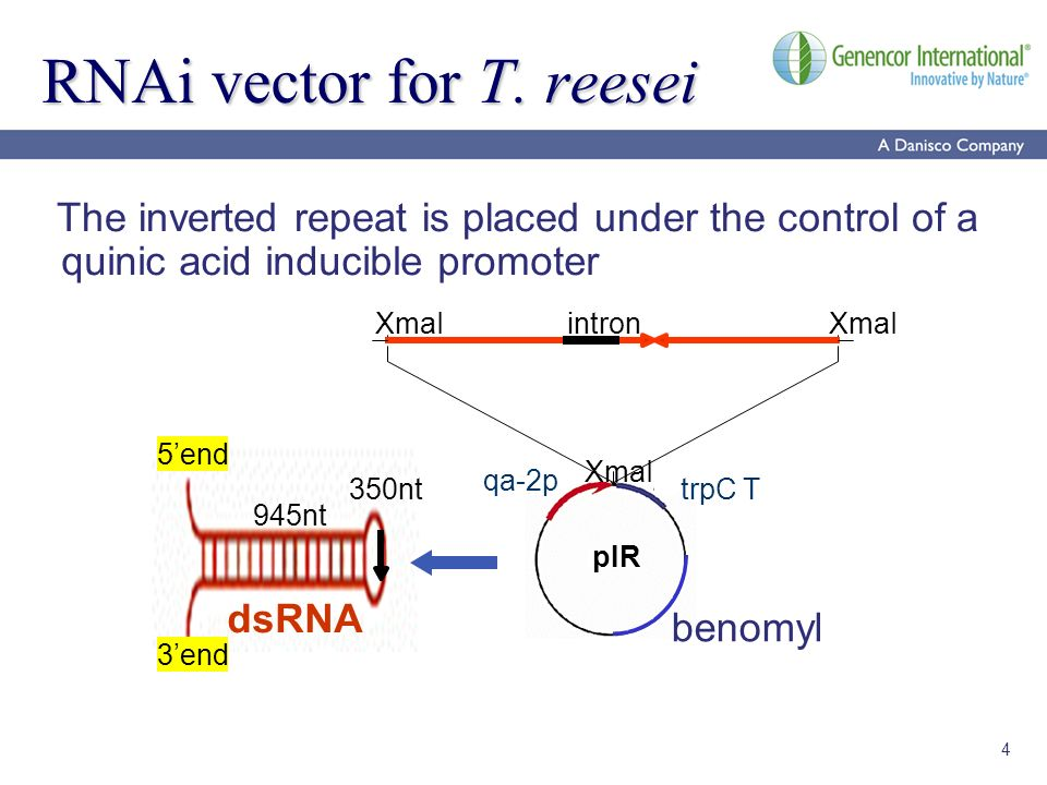 4 RNAi vector for T. reesei trpC T benomyl pIR XmaI intron The inverted repeat is placed under the control of a quinic acid inducible promoter dsRNA 9