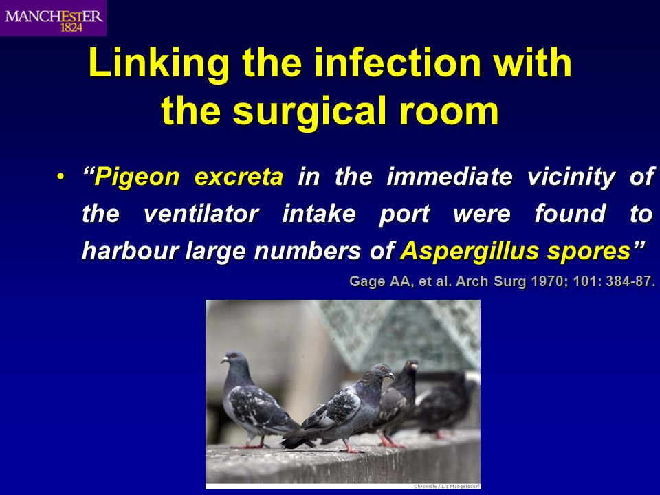 Linking the infection with the surgical room Pigeon excreta in the immediate vicinity of the ventilator intake port were found to harbour large number
