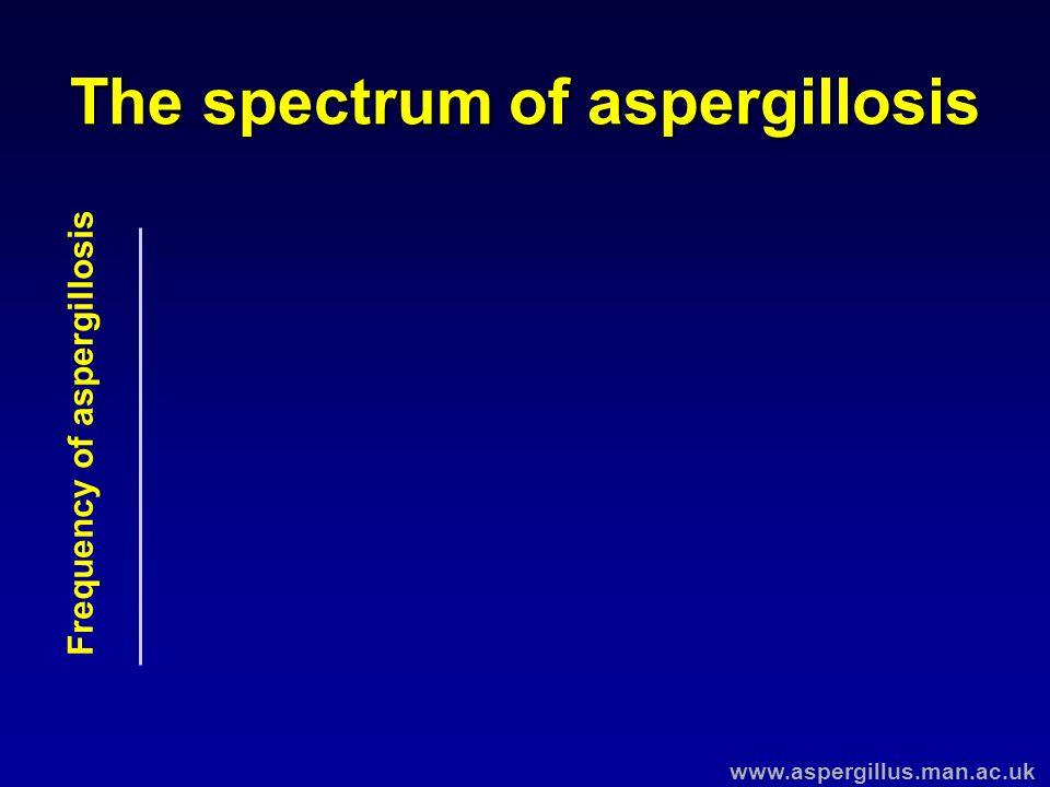 The spectrum of aspergillosis Frequency of aspergillosis www.aspergillus.man.ac.uk