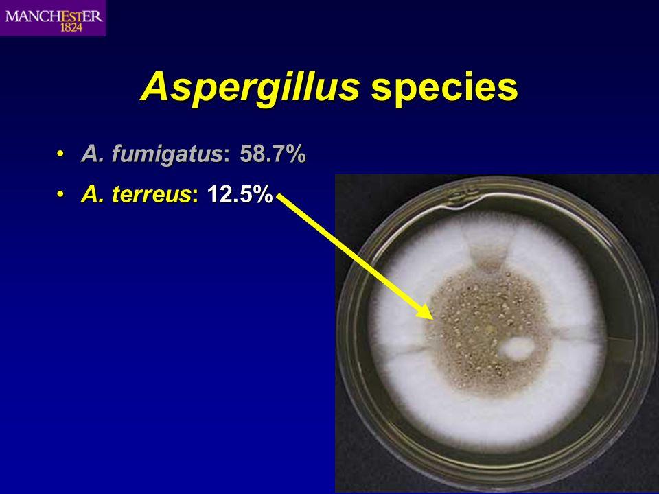 Aspergillus species A. fumigatus: 58.7%A. fumigatus: 58.7% A. terreus: 12.5%A. terreus: 12.5%